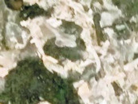 महिला की खोपड़ी, बाल व हड्डियां अलग-अलग जगह फेंककर आरोपी फरार