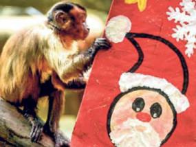 क्रिसमस पर जानवरों को भी दिए गए गिफ्ट, मंकी पढ़ने लगा ग्रीटिंग; तो शेर ने खोला गिफ्ट