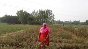 गोंडा में फूलों से महक रही किसान महिलाओं की जिंदगी