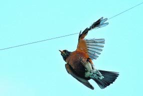 पंछियों को मांझे से बचाने की मुहिम में जुटे पर्यावरण प्रेमी और बर्ड लवर्स