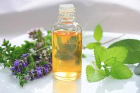 हिमालय के दुर्लभ औषधीय पौधों पर होगा शोध