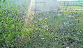 कामठी में मिला डेंगू का मरीज, नागपुर में चल रहा उपचार