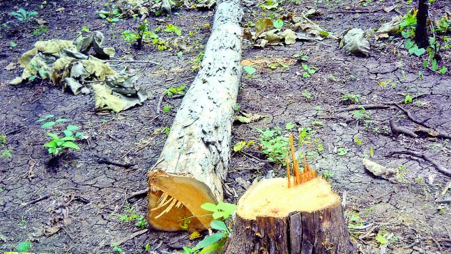 स्मार्ट सिटी प्रोजेक्ट के लिए  139 पेड़ों की होगी कटाई