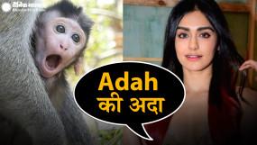 TROLL: बंदरों से की अंग्रेजी में बात, बॉलीवुड की ये एक्ट्रेस हुई ट्रोल