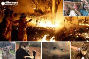 Australia Fire: जंगल में भीषण आग से 50 करोड़ जानवरों की मौत, तस्वीरें देख आंसू रोक नहीं पाएंगे