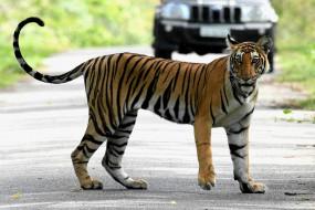 बिहार : अभयारण्य में बाघ से लड़ाई में बाघिन की मौत