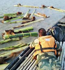 भारत-बांग्लादेश सीमा पर बीएसएफ की मदद से 20 हजार गौवंश को जीवनदान