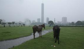घोडों की ग्लैंडर्स बीमारी से इंसान को खतरा : डॉ. त्रिपाठी