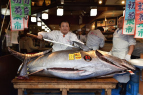 जापान: टोक्यो में ब्लूफिनटूना मछली की हुई नीलामी, 13 करोड़ की बोली लगी