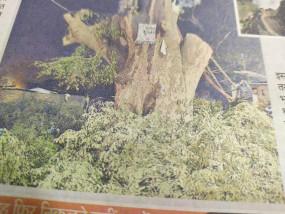 रहस्य - डेढ़ सौ साल से ज्यादा पुराने विशाल इमली के पेड़ में रहस्यमयी आग