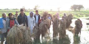 उप्र : खेतों में सड़ गई फसल, मंत्री से नहीं मिल पाए किसान!