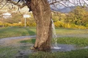 एक ऐसा रहस्यमयी पेड़, जिसमें से अपने आप निकलता है पानी; वैज्ञानिक भी नहीं जान पाए वजह