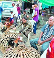 कोरोना वायरस से अफवाह : चिकन व्यवसाय 40% घटा