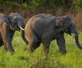 इस राज्य में पिछले 3 सालों में 246 हाथियों की हुई मौत