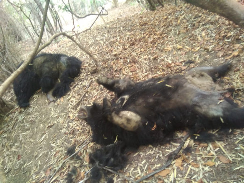 जिंदा बिजली तारों के संपर्क में आने से 5 वन्यजीवों की मौत, 2 तेंदुए,2 भालू व 1 हिरण शामिल