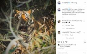 धोनी ने इंस्टाग्राम पर पोस्ट की बाघ की फोटो