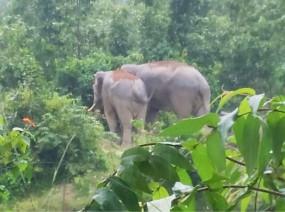 हाथियों ने पकड़ी वापसी छत्तीसगढ़ की राह - तीन चार जिलों में मचा रखा था उत्पात