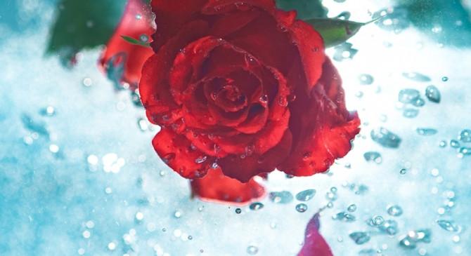 गुलाब की खुशबू पढ़ने और नींद लाने में मददगार