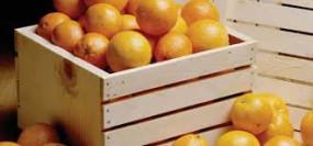 इजरायल की तकनीक से संतरा उत्पादन तीन गुना बढ़ा