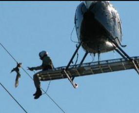 Fake News: क्या जैन समाज ने तार में उलझे पक्षी को हेलीकॉप्टर से बचाया ?