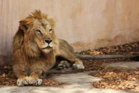 लाहौर के लॉयन सफारी में शेरों ने युवक को बनाया निवाला