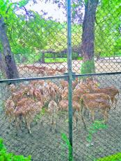 अब हिरणों की भी होगी गणना , वन विभाग ने की तैयारी