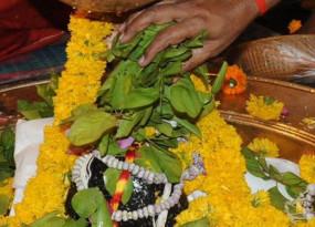 महाशिवरात्रि: पूजा के दौरान जरूर चढ़ाएं बेलपत्र, जानें क्यों हैं शिवजी को पसंद