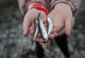 जम्मू-कश्मीर में महाशिवरात्रि पर मछली की विशेष बिक्री