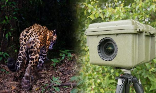 वन्यजीवों पर नजर रखने के लिए लगे दो ट्रैप कैमरे ही चुरा ले गये चोर