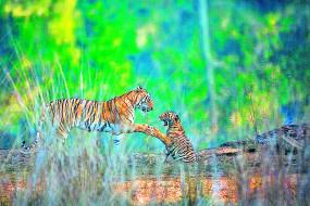 अब जंगली जानवरों को गर्मी में 24 घंटे मिलेगा पानी