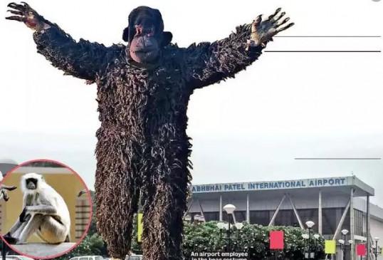 तरकीब: अहमदाबाद हवाई अड्डे ने सुरक्षा के लिए तैनात किया 'भालू', लंगूरों ने कर रखा था परेशान