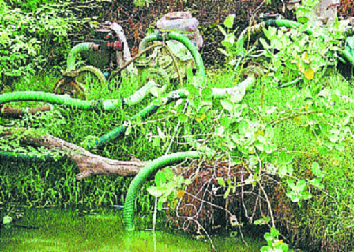 नाले के पानी से उगाई जा रही सब्जियां हडि्डयां कर रही है कमजोर