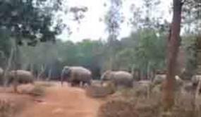 सीधी लाइन में चल रहे हाथियों के झुंड ने ट्विटर यूजर्स को किया प्रभावित