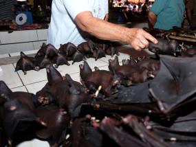 Coronavirus : चीन में फिर शुरू हुई चमगादड़ों के मांस की बिक्री, रविना बोलीं- इंसानों ने नहीं लिया सबक