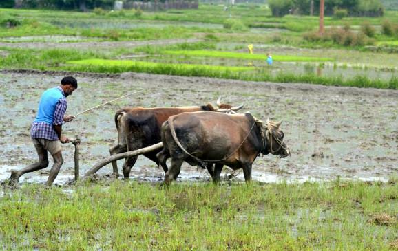 लॉकडाउन से खेतों में खड़ी फसलों ने किसानों की बढ़ाई फिक्र