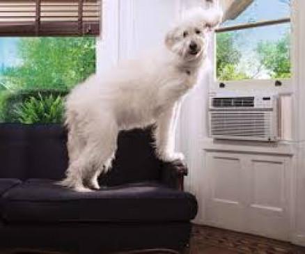 कुत्तों को एसी की हवा खिलाने की बिजली चोरी, अब भरना पड़ा सात लाख जुर्माना