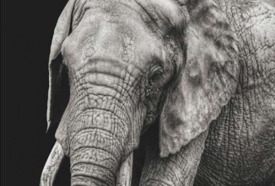 104 साल पहले हाथी को दी गई थी फांसी, आखिर क्यों लोगों के कहने पर देनी पड़ी थी हाथी को मौत की सजा