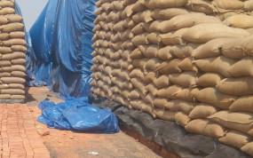 धान उपार्जन -किसानों का 53 करोड़ रुपए का भुगतान अटका