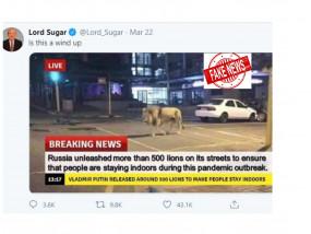Fake News: कोरोना से निपटने के लिए रूस के राष्ट्रपति पुतिन ने सड़कों पर छोड़े 500 शेर?