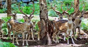 Covid19: जानवरों को भी कोरोना का खतरा, देश के सभी चिड़ियाघर हाई अलर्ट पर