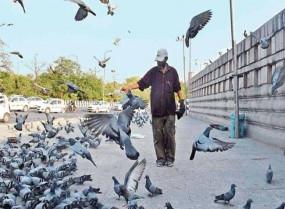 कोविड-19 : लॉकडाउन में एक शख्स भर रहा पक्षियों के पेट