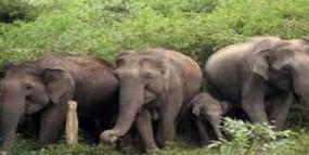 उत्पाती हाथियों ने ले ली बुजुर्ग की जान, ग्रामीणों में दहशत, अधिकारी करते रहे बहाने बाजी
