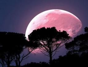 Super Pink Moon 2020: लॉकडाउन के बीच दिखेगा साल का सबसे बड़ा सुपरमून, जानें भारत में समय, कब देखें