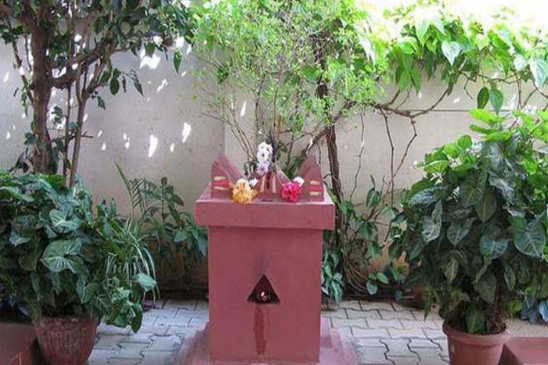 मान्यता: तुलसी के पौधे को शाम के समय ना लगाएं हाथ, गुरुवार को रखें इन बातों का ख्याल