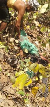 महिला पर बाघ ने किया हमला - मौके पर मौत -महुआ बीनने गई थी मृतका