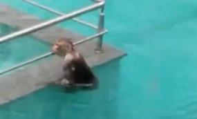 टिस्का चोपड़ा ने बंदरों की पूल पार्टी का वीडियो साझा किया