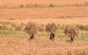 लॉकडाउन के दौरान पीएम-किसान के तहत जारी हुए 18134 करोड़ रुपये