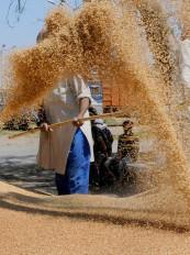 बुंदेलखंड : गेहूं क्रय केंद्र न खुलने पर किसान नेता आमरण अनशन पर