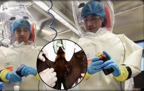 चीन: वुहान की वायरोलॉजी लैब में मौजूद थे कोरोना वायरस के तीन जीवित स्ट्रेन, लेकिन...