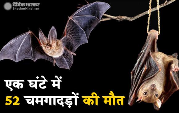 उप्र: गोरखपुर में एक घंटे में 52 चमगादड़ों की अचानक हुई मौत, ग्रामीणों में दहशत